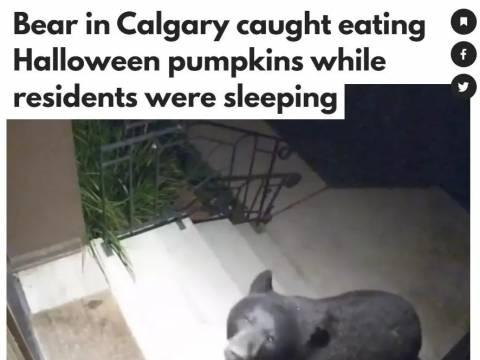 """呆萌!加拿大""""熊孩子""""大闹社区,天天凌晨跑居民家门口大吃!"""